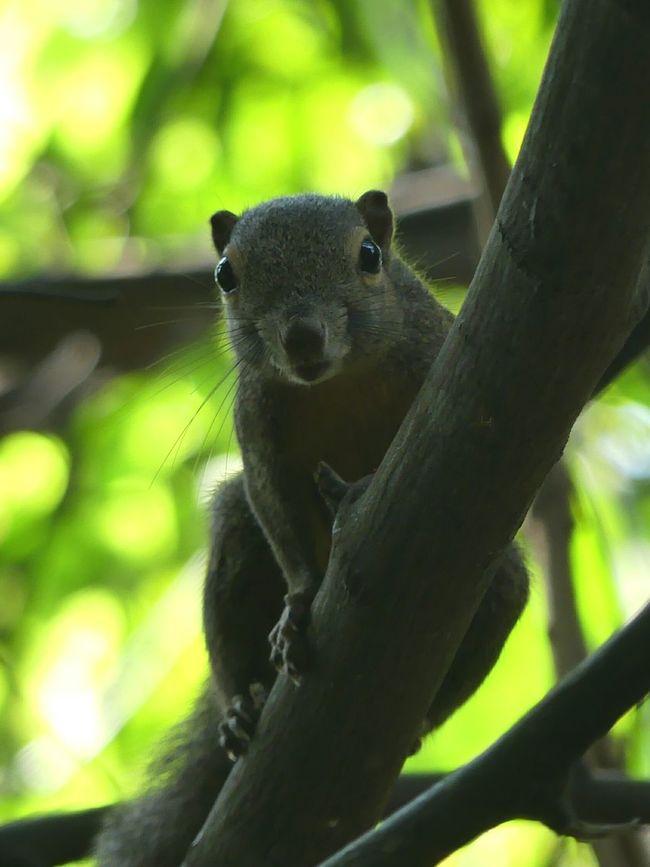 Squirrel Squirrels Squirrel Closeup Squirrel Photo Squirrel! Squirrelporn