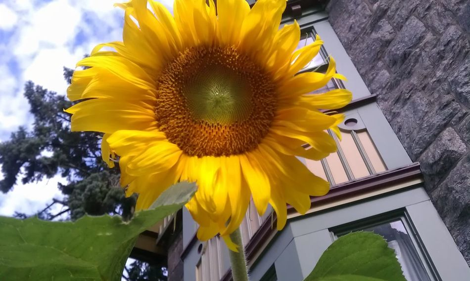 Stamford Ct Outdoors Nature Flowers Colours Sunflower🌻 Building Church