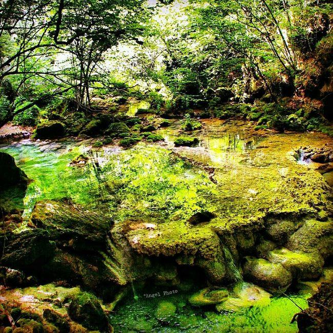 Streamzoofamily EyeEm Nature Lover Somosfelices Españoles Y Sus Fotos