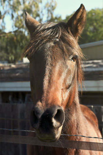 Horses in Morning Light Horses Livestock Ranch Animal Head  Animal Themes Close-up Day Domestic Animals Focus On Foreground Horse Mammal No People One Animal Outdoors Portrait