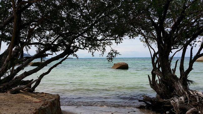 Mangroves On The Beach Koh Phangan