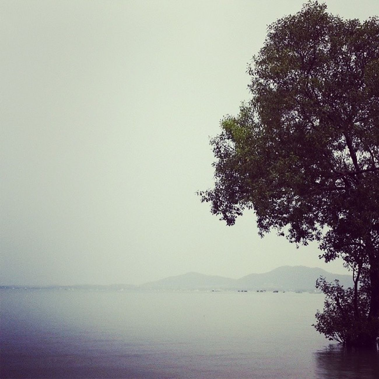 เหงา...เหงา