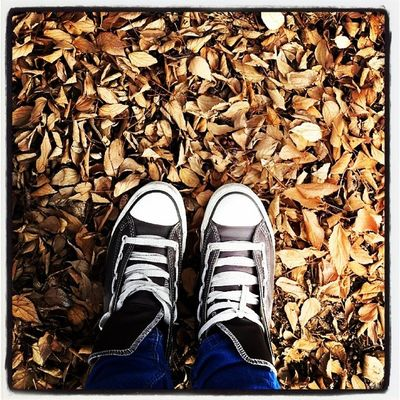 From where I stand. Brown Leaves Converse