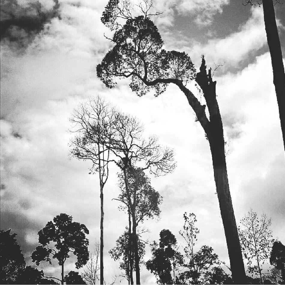 Borneo Forest Black And White Photos Around You This Is Indonesia Hutan Hutan Mati Blackandwhite Photography