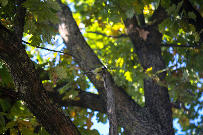 #birds Beauty In Nature Branch Day Focus On Foreground Green Color Growth Low Angle View Nature Outdoors Scenics Selective Focus Tranquil Scene Tranquility Tree Tree Trunk