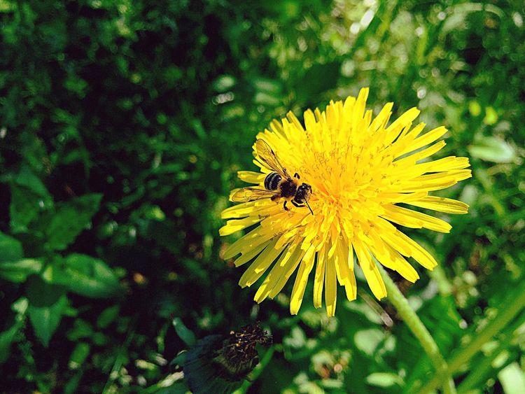 I like honey IPhon6 Secret Garden
