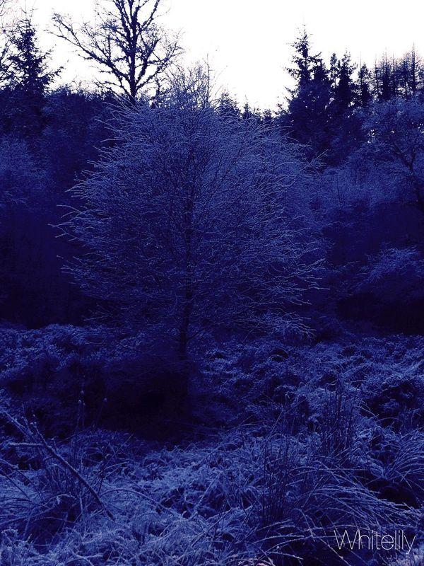 Snow ❄ Highlandhills