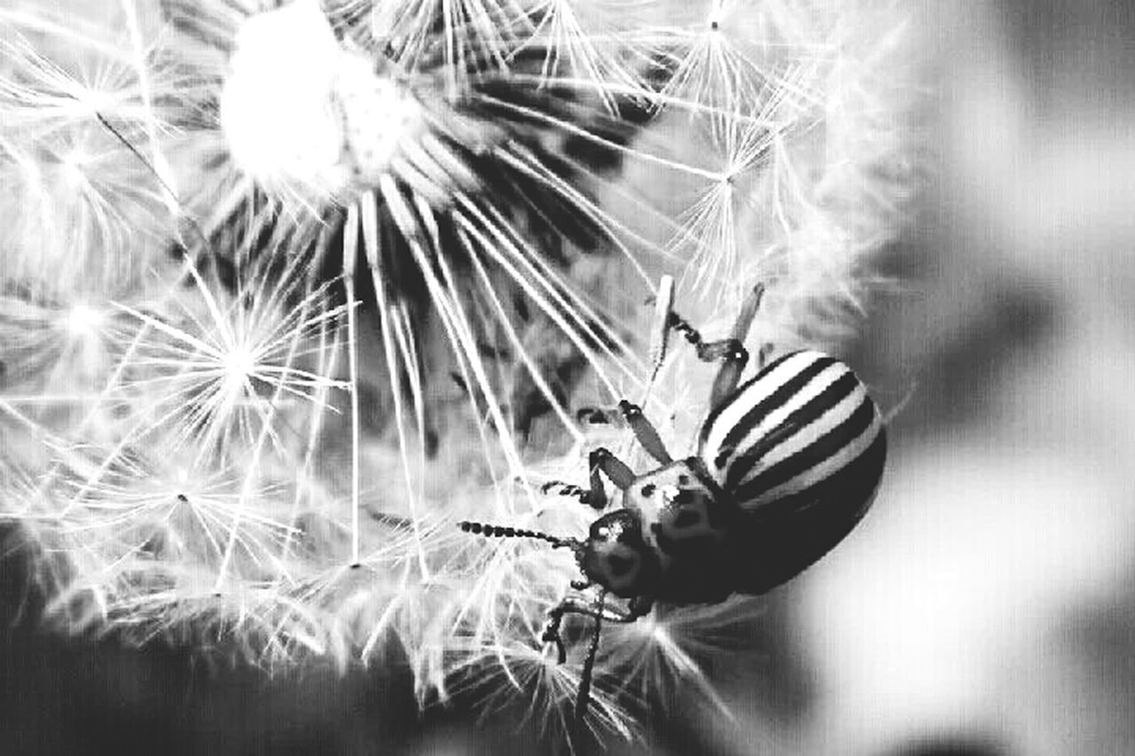 Macro_bugs Macro_collection Nature Blackandwhite