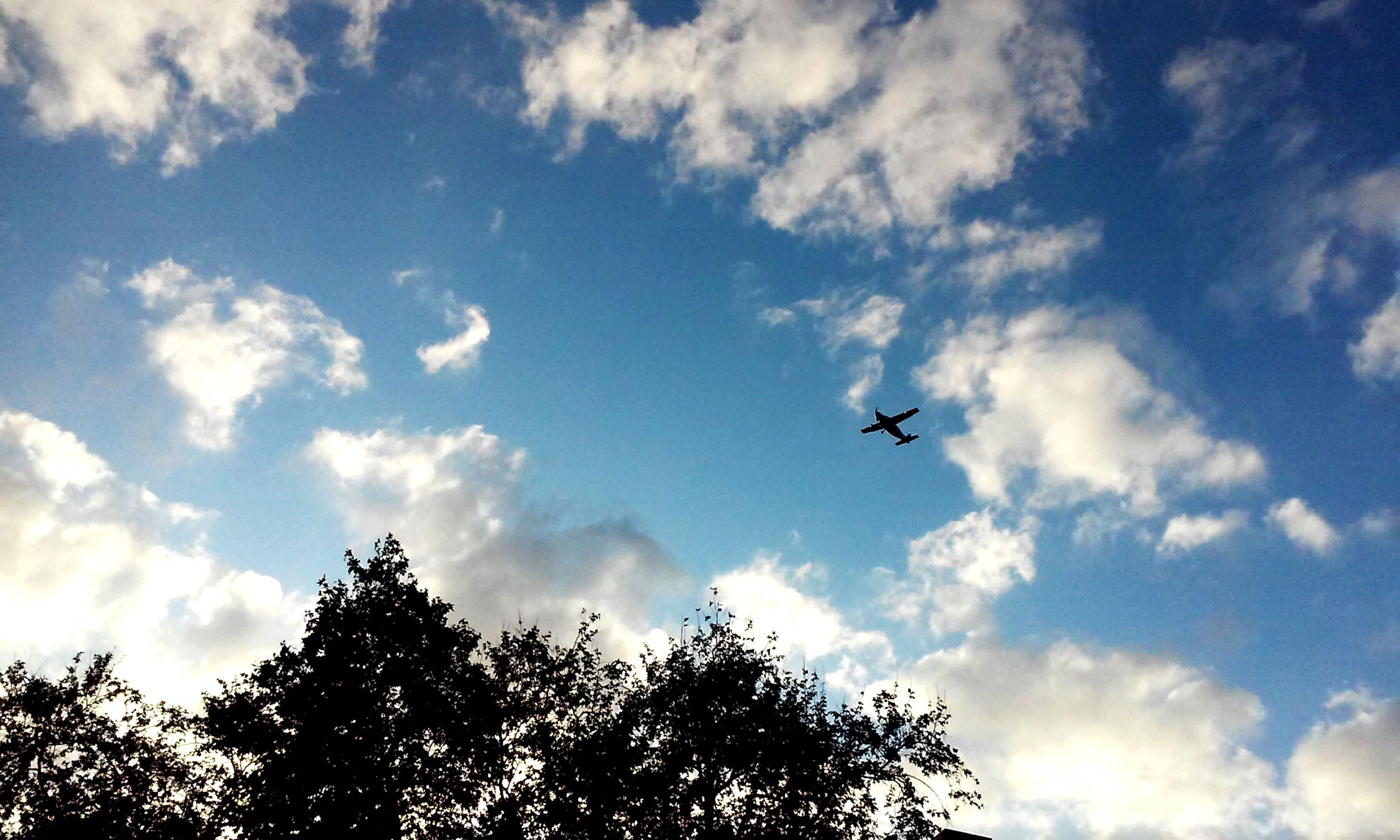 flying, low angle view, sky, mid-air, transportation, tree, airplane, air vehicle, mode of transport, cloud - sky, bird, silhouette, on the move, nature, cloudy, cloud, wildlife, animal themes, blue, day