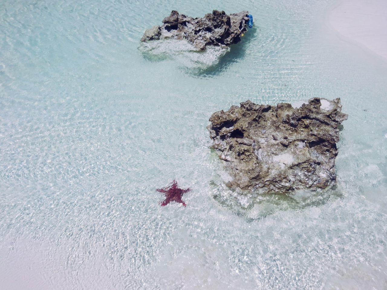Diani Beach, Kenya. No People Nature Beauty In Nature Sea Life Indian Ocean Minimal VSCO EyeEm Best Edits EyeEm Best Shots Travel Destinations Travel LandscapeWater Beach Diani Beach Starfish  Starfish At Beach Adventure Africa Kenya Ocean