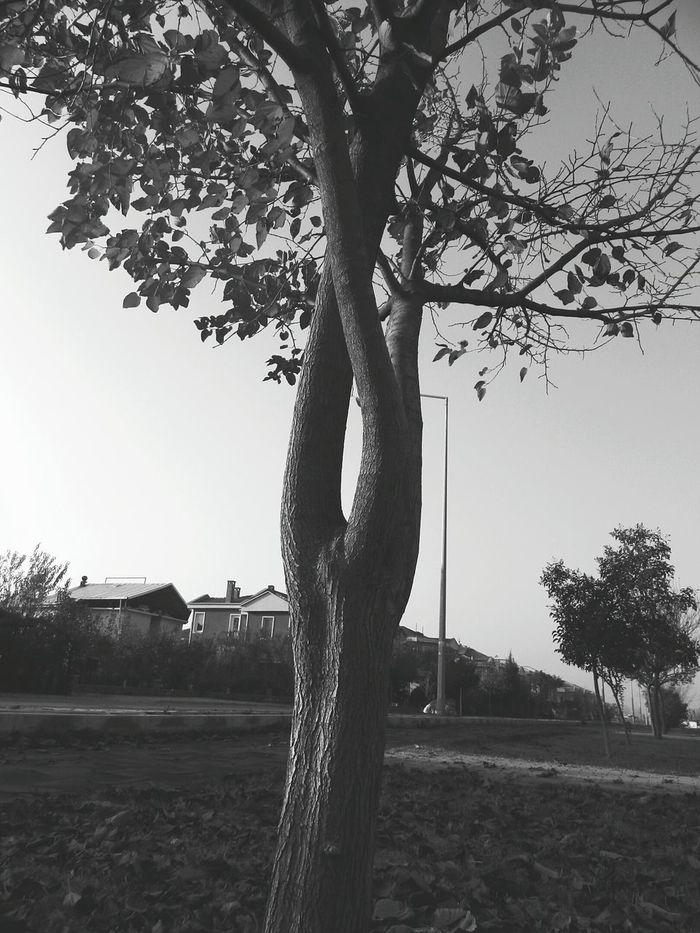 Outdoors Nature Sky No People Day Tree Black And White Full Frame Tree Trunk. Tree Branch  Autumn Leaves EyeEm Nature Lover EyeEm Gallery EyeEm
