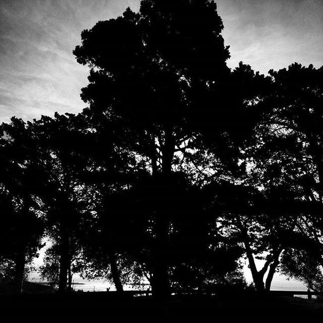 Life Enjoyit Keepgoing Tree Treelovers Nature Naturelovers Peace Peaceful Friday Blackandwhite Blancnoir Sunrise Sunrise_sunsets_aroundworld Shadow Shootingtheglobe Portugalsemefeitos P3top Follow Sun Portugal Marginal Laliphotography Photo Oneplusone landscape_lovers thecoolmagazine