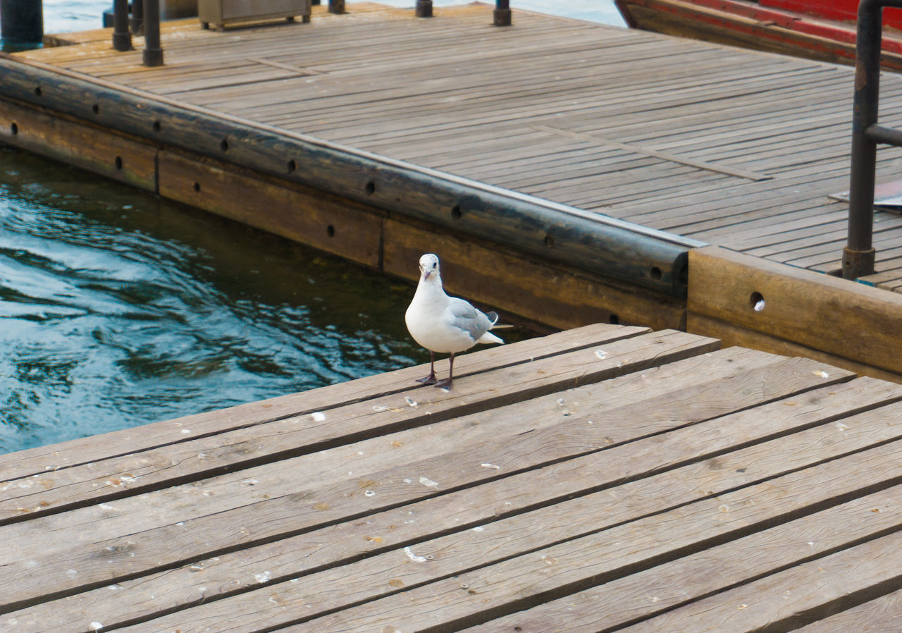 Animal Themes Animal Wildlife Bird Day Dock Dubai DXB One Animal Outdoors Perching Sea Seagull UAE Water Wood - Material