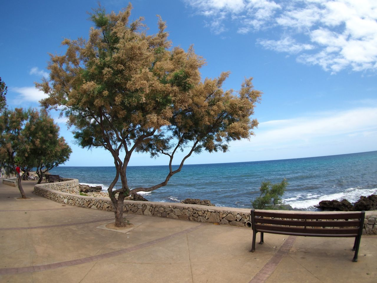sea, tree, horizon over water, water, nature, sky, beauty in nature, tranquility, no people, scenics, beach, day, outdoors