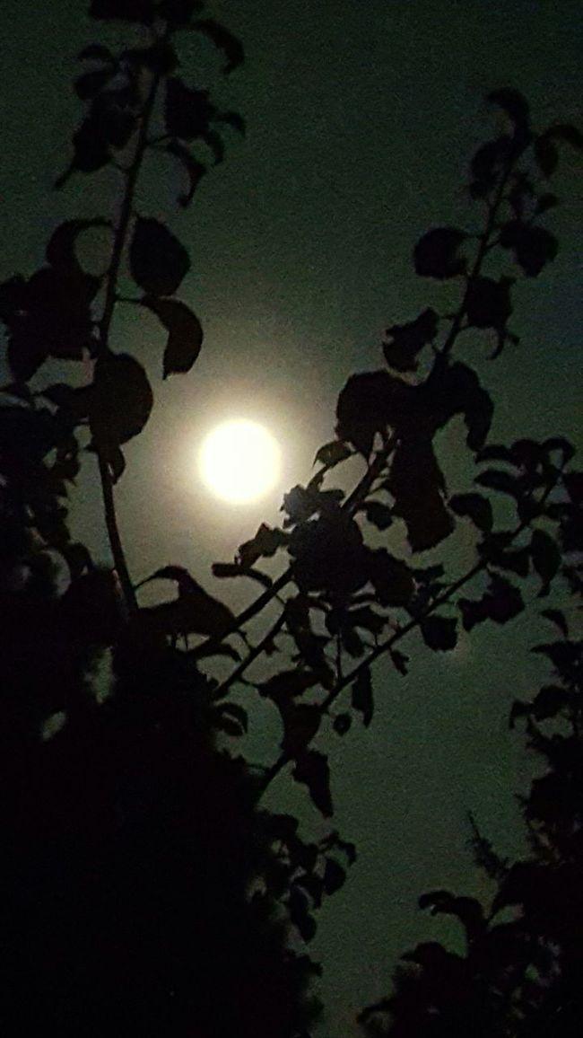 The Week Of Eyeem Vollmond Moonlight Light And Shadow Moonlight In The Dark This Week On Eyeem Malijasi