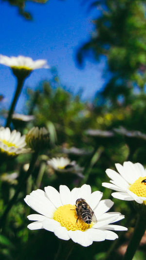 Insect Flower Animals In The Wild One Animal Plant Nature Outdoors Animal Themes Animal Wildlife Summer Bee Freshness Blue Field Sunset Sky Sea Photography Mountain Canon Landscape Day TOWNSCAPE Farm Tree