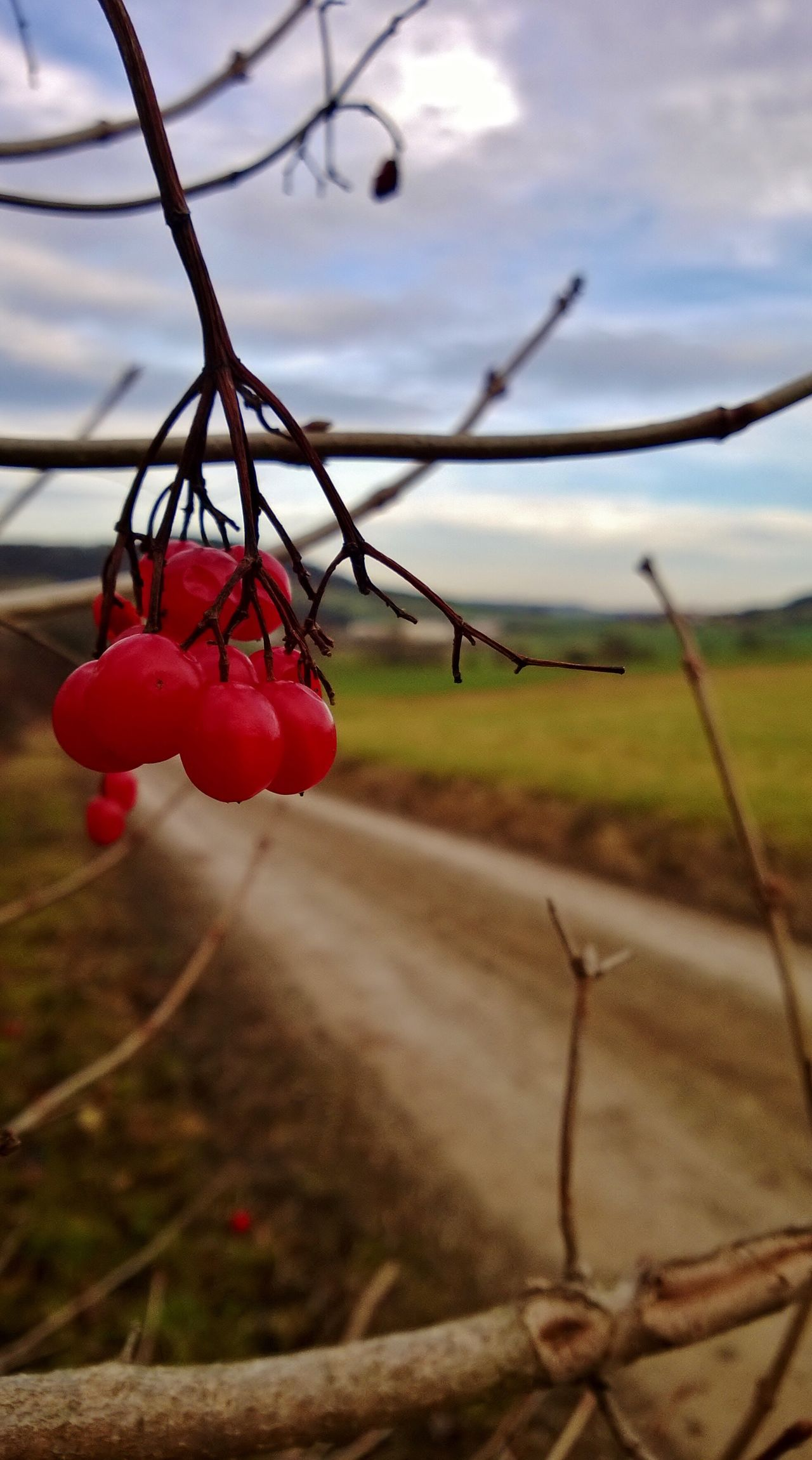 Focus On Foreground Red Close-up No People Growth Nature Sky Outdoors Food Day Fragility Berry Fruit Berrys