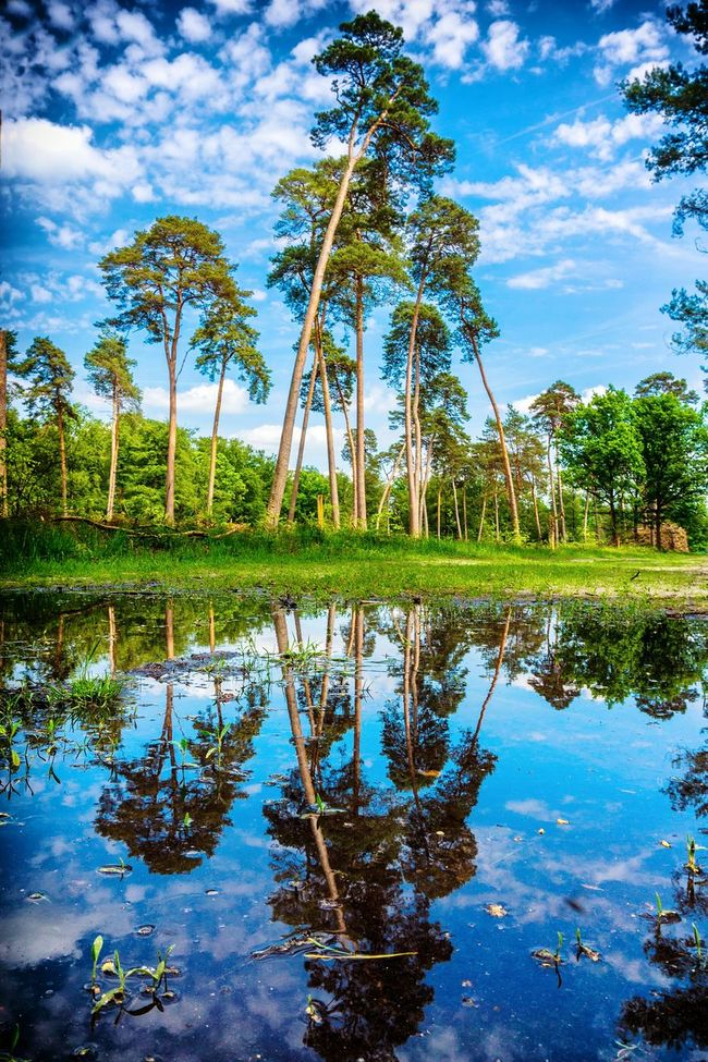 After rainy and rainy again... In France, Ermenonvillle forest. Forest Reflections In The Water Reflection Puddle Outdoor Photography Forestwalk Forest Photography The Great Outdoors - 2016 EyeEm Awards Clouds Landscape Countryside Tree