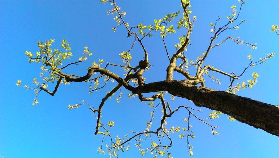 Tree Fresh Frisch Frisches Grün Baum First Eyeem Photo