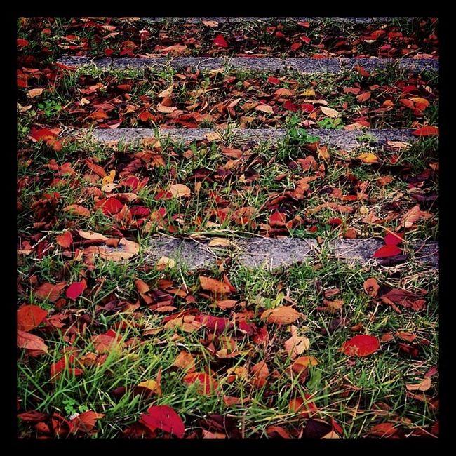 サクサクと落ち葉の上を歩くのは楽しいね。 To walk and crispy on the fallen leaves It is interesting. Fallenleaves Leaves Autumn Fall walk nara japan red orange green slope crispy 秋 落ち葉 散歩 坂道 赤 橙色 緑 紅葉 奈良 サクサク