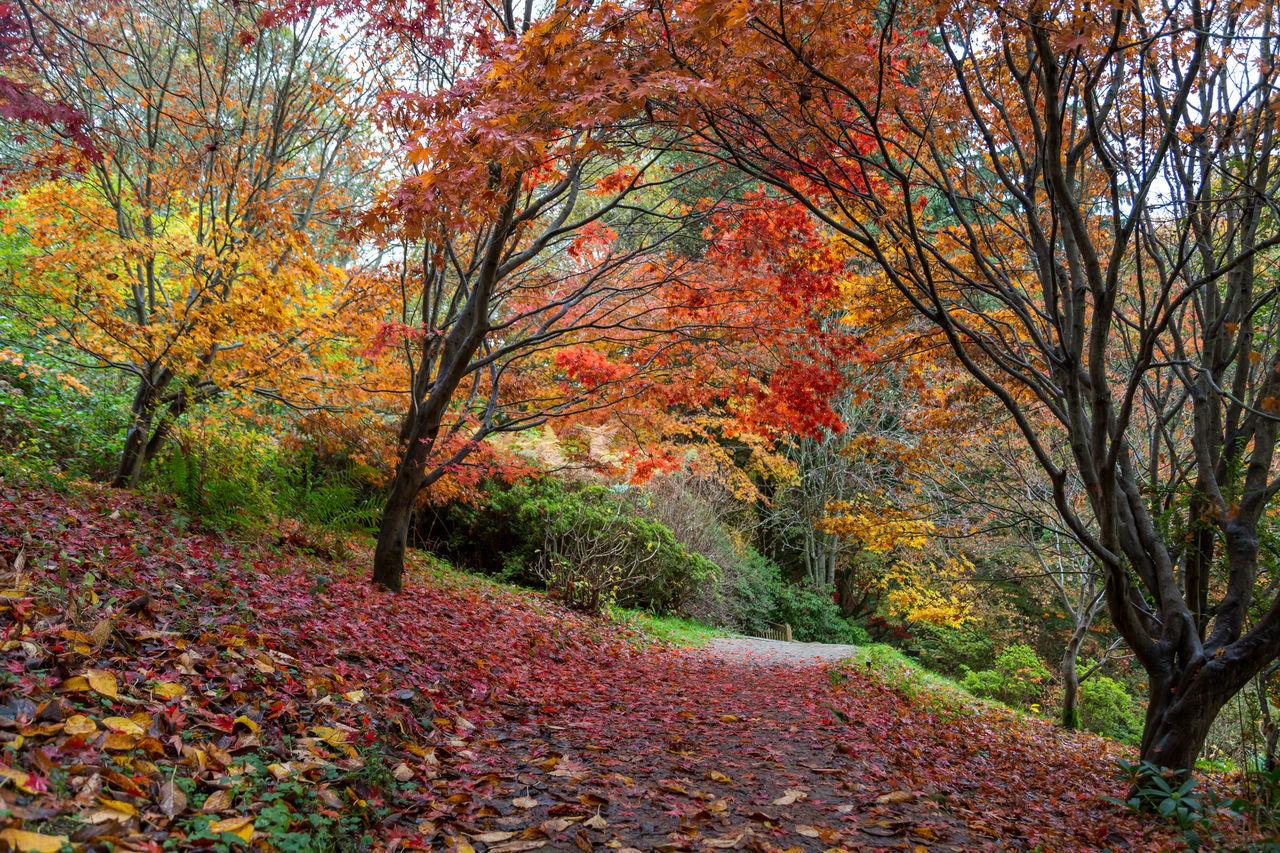 Winkworth Arboretum, a National Trust owned arboretum in Surrey, near Godalming. 4th November 2015. Arboretum Autumn Autumn 2015 Autumn Colors Autumn Colours Autumn🍁🍁🍁 Fall Fall Beauty Fall Colors Fall Colours Leaves Nature Surrey Trees Winkworth Winkworth Arboretum