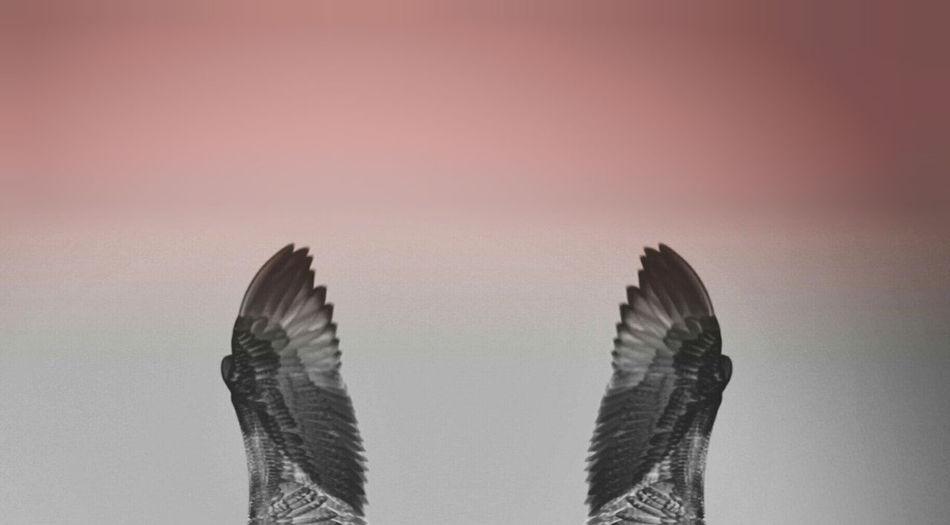 Gray Minimalism Bird Colors Field Flying Gray Color Pink Color Wing Wings два крыла крылья минимализм небо птицы серый фон