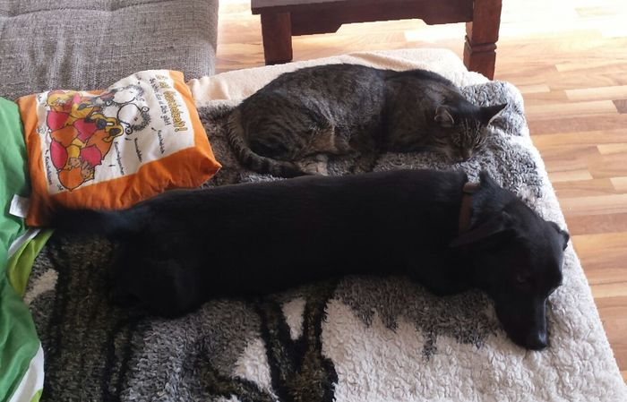 Relaxing Cat And Dog
