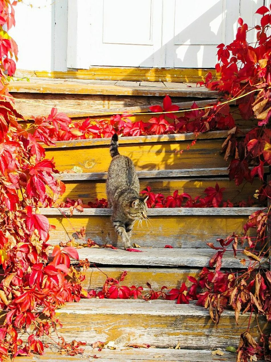 City History Day No People Cat Catoftheday Cats Of EyeEm осень🍁🍂 осеньвроссии Псков Russia Pskov