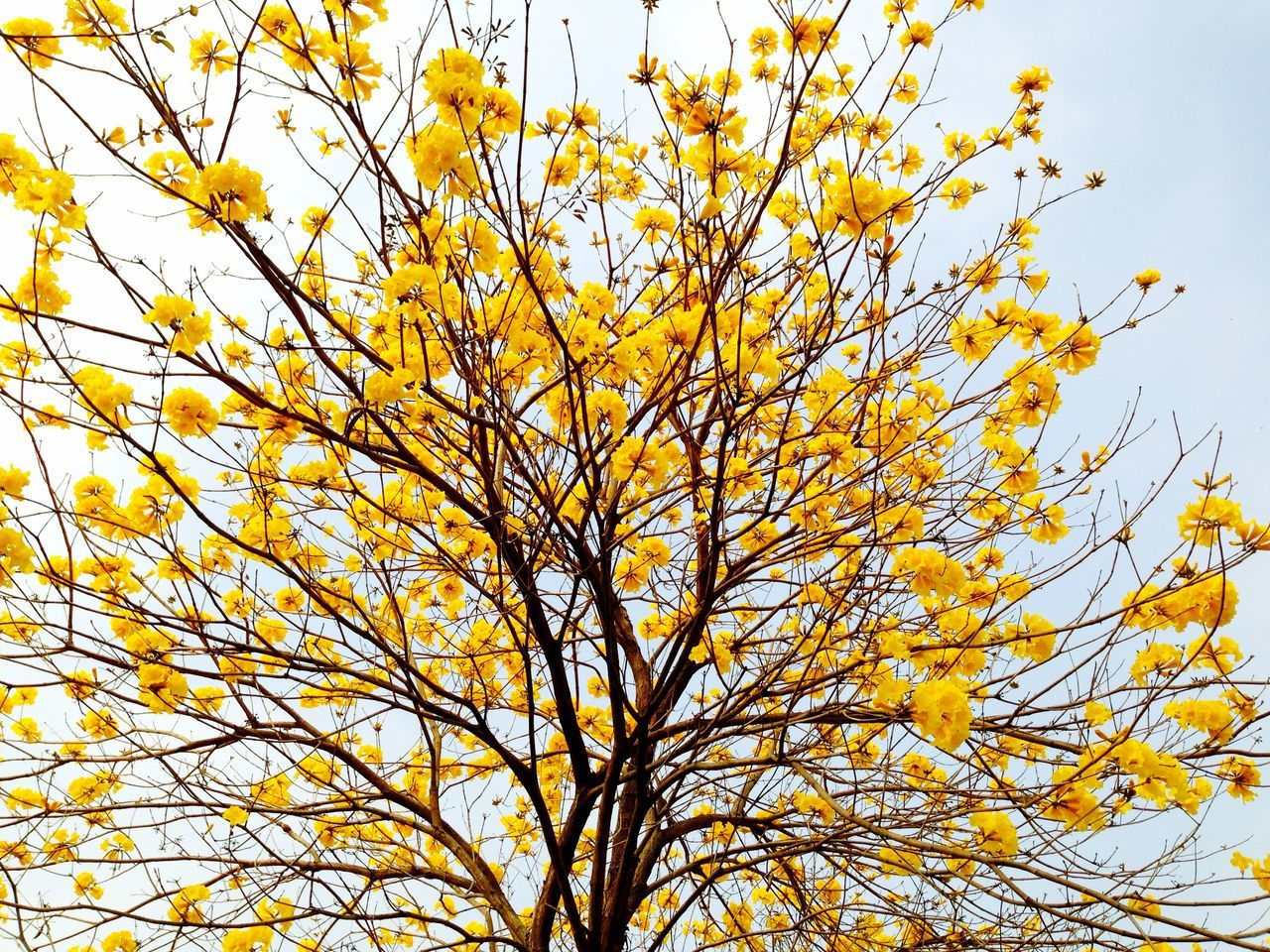 Yellow Flower Trees EyeEm Trees