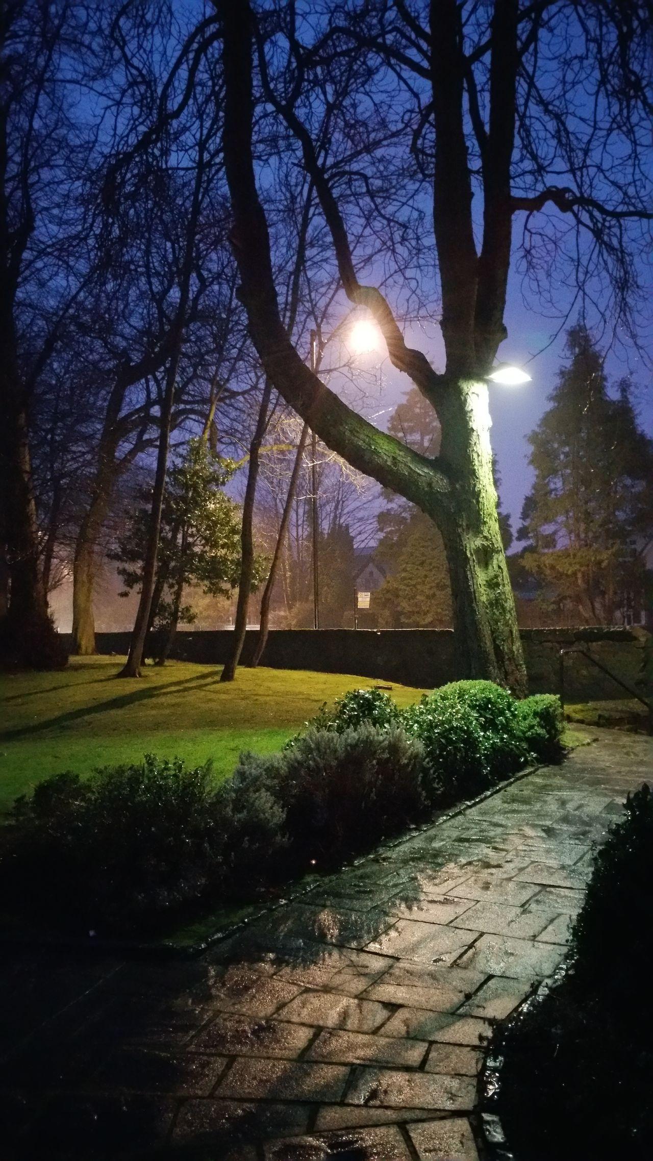 The path home. The Purist (no Edit, No Filter) Tree Dusk Light And Shadow Spotlight Misty Evening Rain Pathway Rain No People Samsung Galaxy Note 4 Samsung Photography Evening Walk