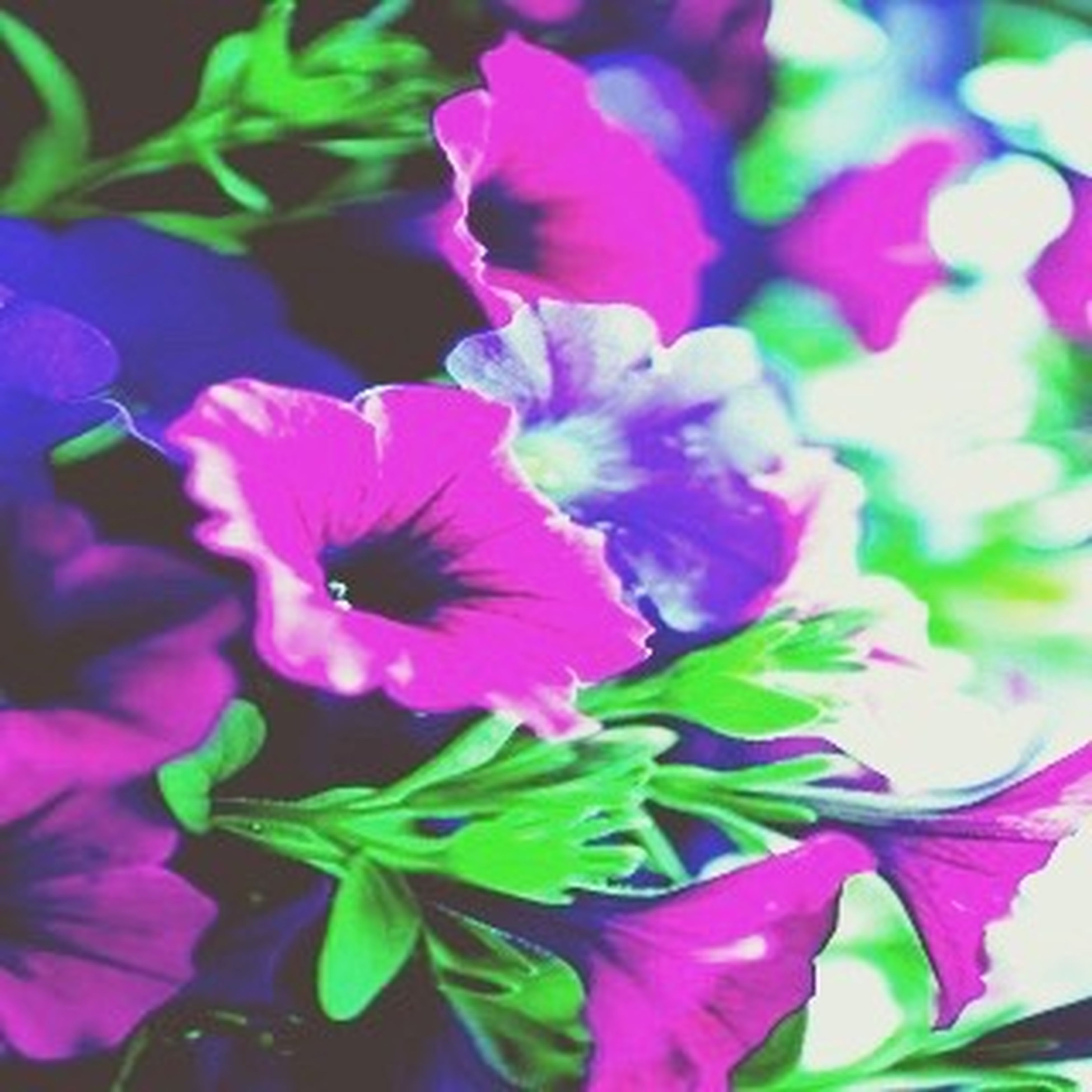 flower, freshness, petal, growth, fragility, beauty in nature, flower head, leaf, close-up, plant, blooming, pink color, nature, focus on foreground, purple, in bloom, park - man made space, blossom, day, outdoors