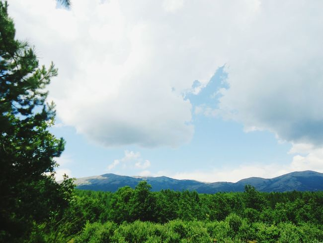 Forest Mountains Trees Nature Green Nature Greenery Beautiful Peaceful Scenery Relax Escapereality Photography
