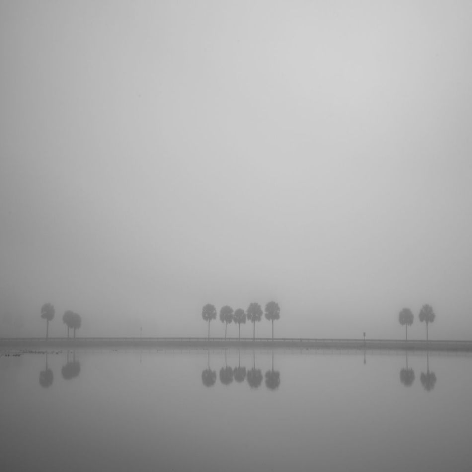 Tranquil Scene Tranquility Reflection Nature Scenics No People Beauty In Nature Clear Sky Hazy  Outdoors Standing Water Mist Water Sky Tree Day Fog Foggy Foggy Morning