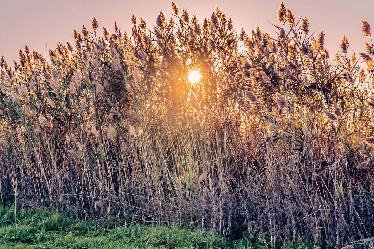Beauty In Nature Close-up Day Foxtail Foxtail Grass Foxtails Grass Growth Meadow Nature No People Outdoors Salem County NJ Sky Sun Sunbeam Sunlight Sunset Tree