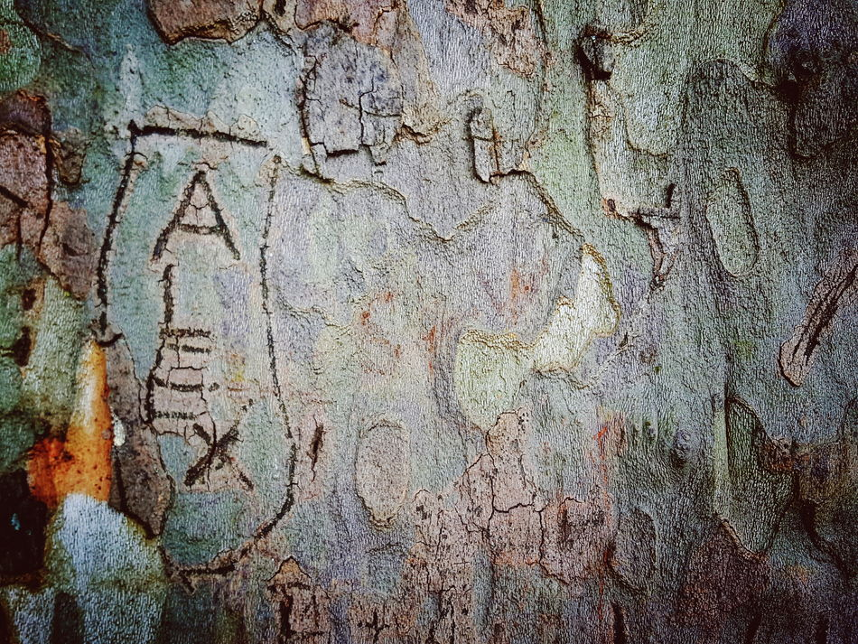 Who the hell is Alex? 😉 Tree Bark Check This Out Fine Art Photography From My Point Of View For The Love Of Details Loveletters Letters Love 150 Years Old TreePorn Trees Patterns And Textures Close Up Close-up Schwerin Schlossgarten Schwerin Mecklenburg-Vorpommern Old Trees Colour Of Life Colors and patterns Art Is Everywhere