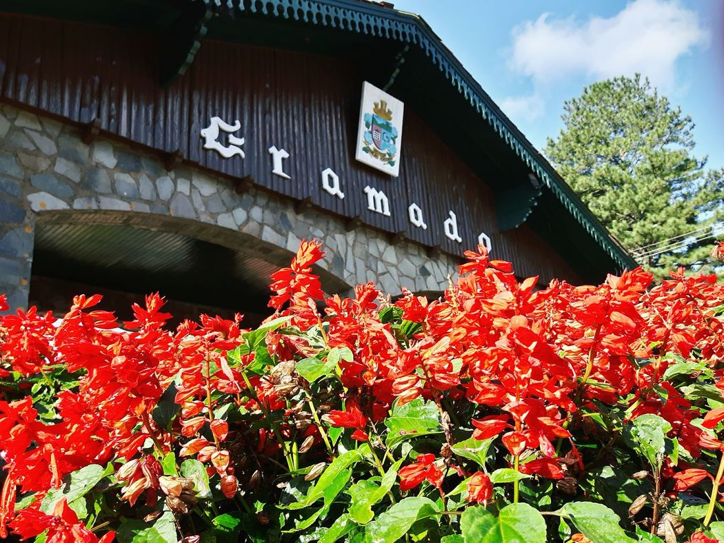 Exclusive  Gramado/RS Rosas Garden Plantas Flores Y Frutos Flowers,Plants & Garden Flowers Nature Red Vermelha