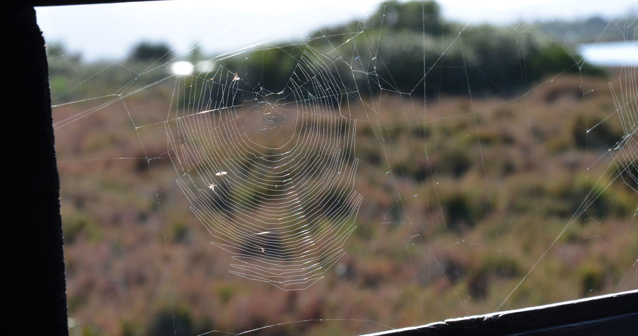 spider web, focus on foreground, web, nature, spinning, spider, close-up, fragility, day, outdoors, no people, one animal, beauty in nature, trapped, animal themes, freshness