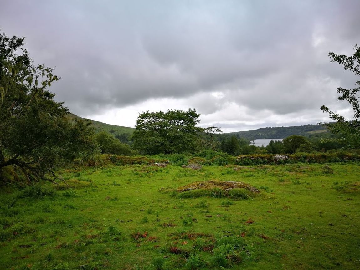 Burrator Burrator Reservoir Dartmoor Beauty In Nature Cloud - Sky Day Grass Green Color Growth Landscape Mountain Nature No People Outdoors Scenics Sky Tranquil Scene Tranquility Tree