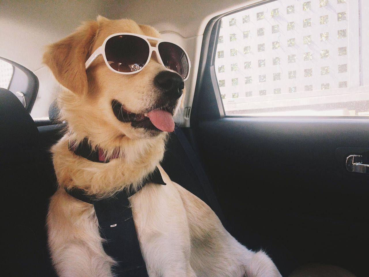 Beautiful stock photos of funny animal, Animal Themes, Aranjuez, Car, Day