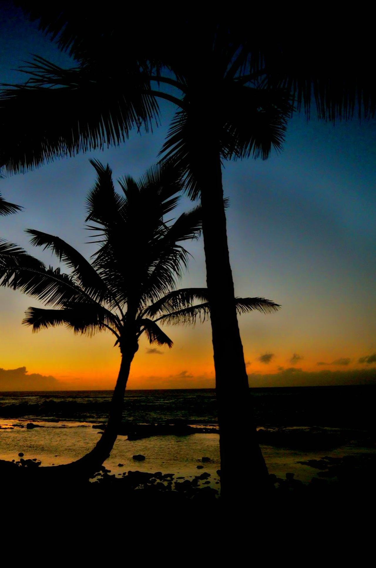 Beauty in nature. The Great Outdoors - 2016 EyeEm Awards EyeEm Best Shots Horizon Over Water Palm Tree Hawaii Sunset Orange Color Mauiphotography Sunset Nature Tranquility Hawaii Life Scenics Beauty In Nature Travel Destinations Hawaii Tourism Paintedsky Travel Photography Tranquil Scene Maui Sunset Landscape No People Sun Non-urban Scene Outdoors