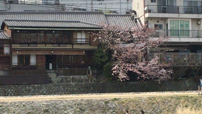 April In Kyoto Kyoto Sakura Sakura2016 Kyoto Spling Cherry Blossom Kyoto,japan Kyoto City
