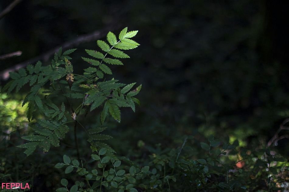 Aoutmn Forest Folowforfollow Nature Folowme Nofilter Hudiksvall