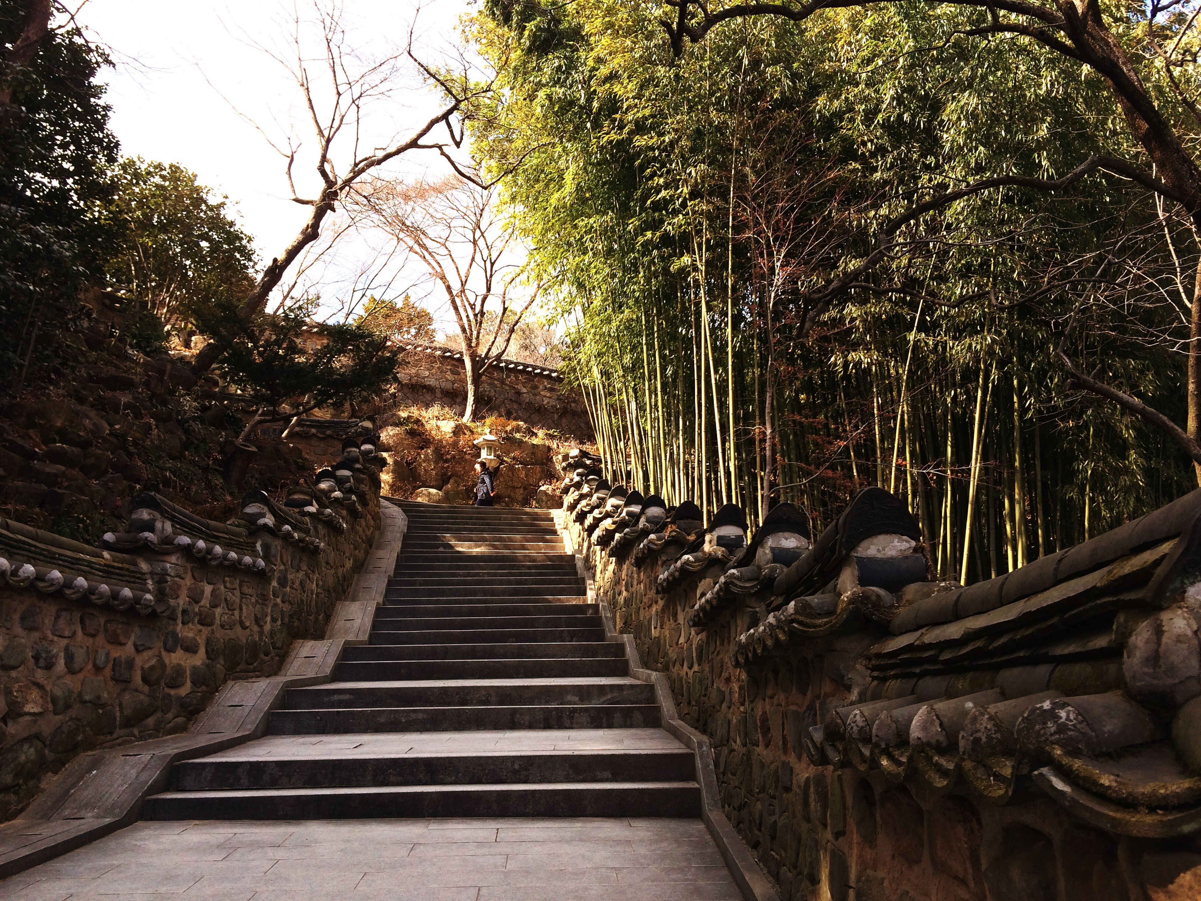 tree, steps, the way forward, built structure, architecture, steps and staircases, staircase, building exterior, railing, diminishing perspective, low angle view, old, outdoors, gate, day, entrance, history, no people, vanishing point, sky