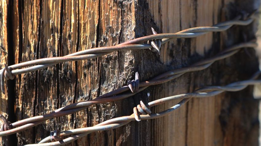 No People Nature Outdoors Wood - Material Close-up Day Metal Western Protection Dangerous Nevada Safety Barbed Wire Strong Focus On Foreground