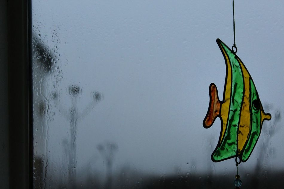 Rainy day Rainy Days Rainy No Sun Today Cloudy Miserableweather Yuck Grey Winter Wales Evening EyeEm Best Shots