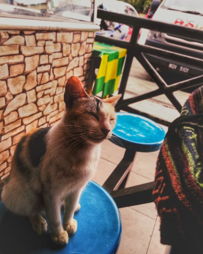 EyeEm Selects Pets One Animal Domestic Cat Domestic Animals Animal Themes Mammal Indoors  Sitting No People Day Kitten Mobilephotography Outdoors Motion Connected By Travel Friendship Nature EyeEmNewHere Happiness😊 Scenics
