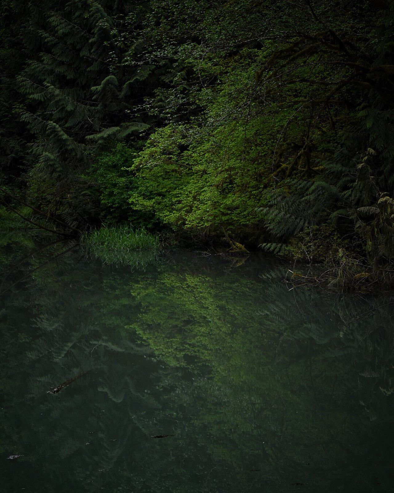 Forest Nature Water No People Green Color Beauty In Nature Tranquility Outdoors Tree Landscape Day Scenics The Great Outdoors - 2017 EyeEm Awards Waterscape Water Surface Pond Life Waterfront Water_collection Water Reflections Pond Beauty In Nature