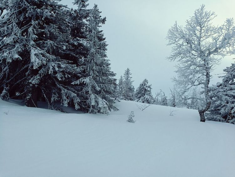 Snow Cold Temperature Winter Tree Forest Nature Frozen No People Day Outdoors Beauty In Nature Sweden Skiing Non-urban Scene Wilderness Calm February