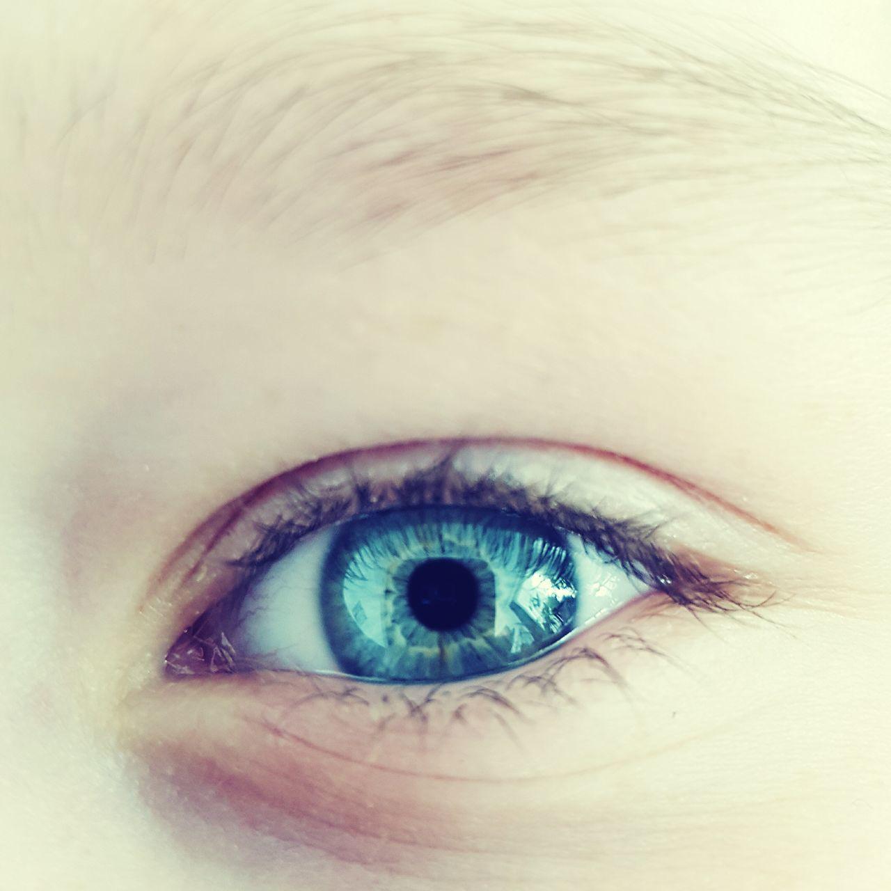 human eye, human body part, eyelash, sensory perception, macro, eyesight, eyeball, iris - eye, one person, close-up, real people, human skin, eyelid, looking at camera, eyebrow, portrait, indoors, day, adult, people