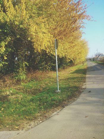 Fall Autumn Nature Beautiful